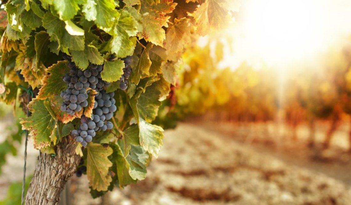 """Come le aziende vitivinicole comunicano il vino.""""BeSharable"""" analizza il mercato"""