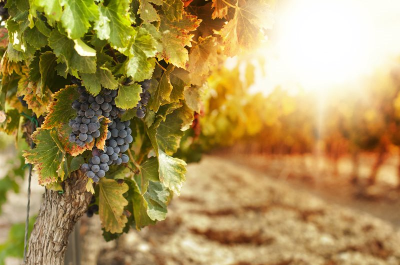 How do wineries promote and publicise wine 'BeSharable' analyzes the market