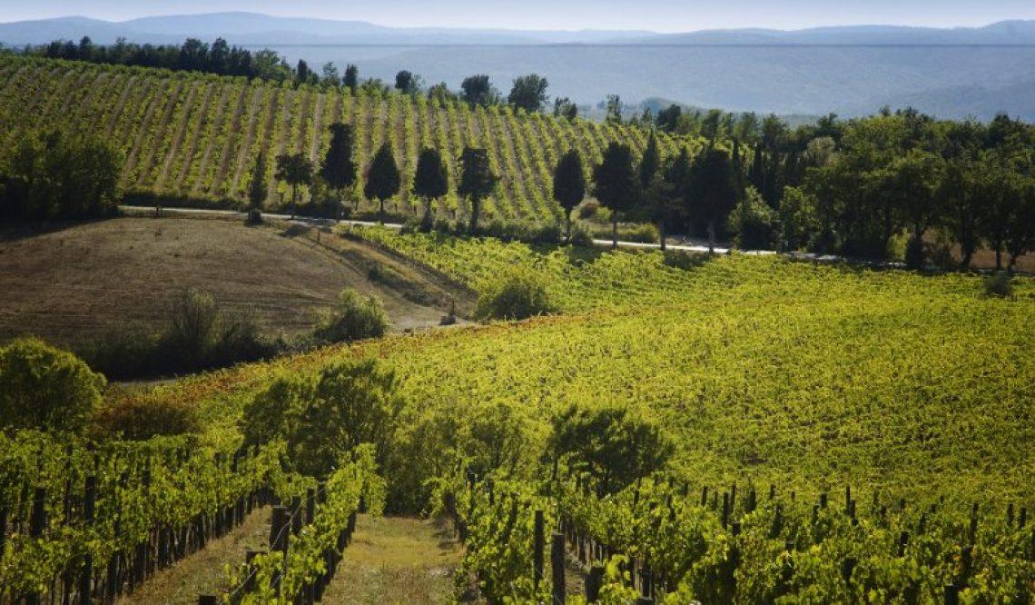 Great Estate Group alla conquista dei wine lovers cinesi. I vitigni italiani parlano cinese