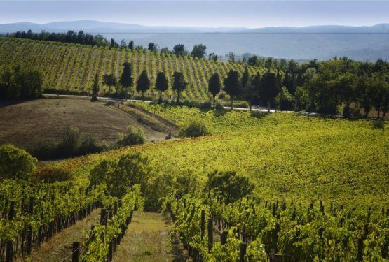 The Great Estate Group and chinese wine lovers.The Italian Vines speak Chinese