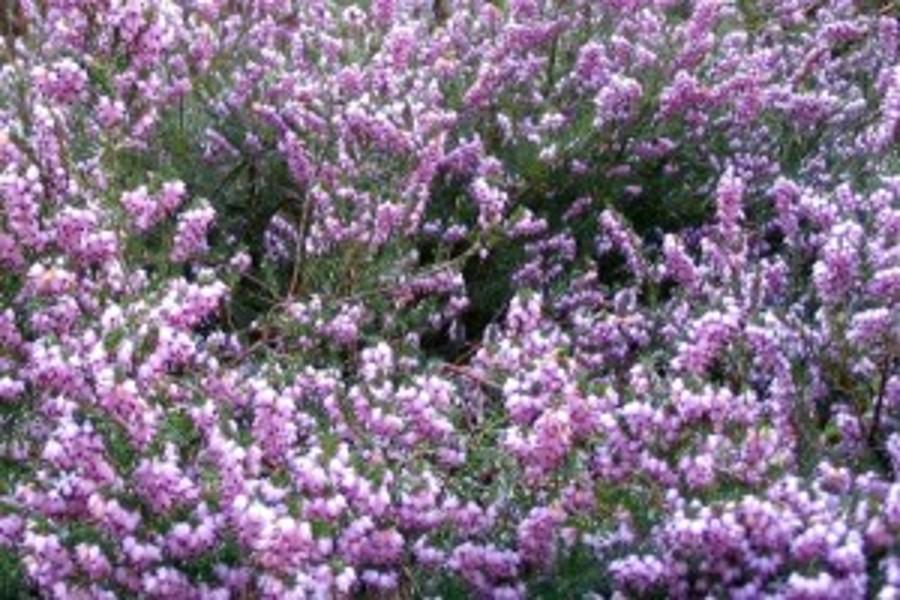 An autumn garden.The 5 flowering plants that bloom in autumn