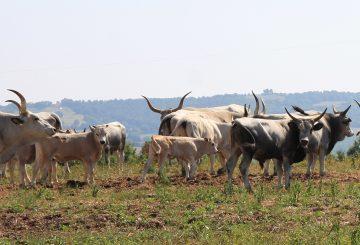 Organic farm and its characteristics