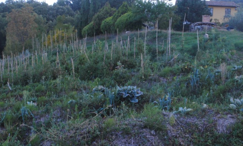 """Synergistic gardening, an easy way for """"natural"""" cultivation of land"""