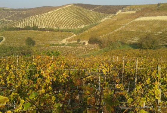 Piedmont: Italian patrimony