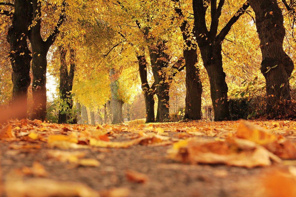 L'autunno 2017 si è tinto di giallo per Great Estate Immobiliare