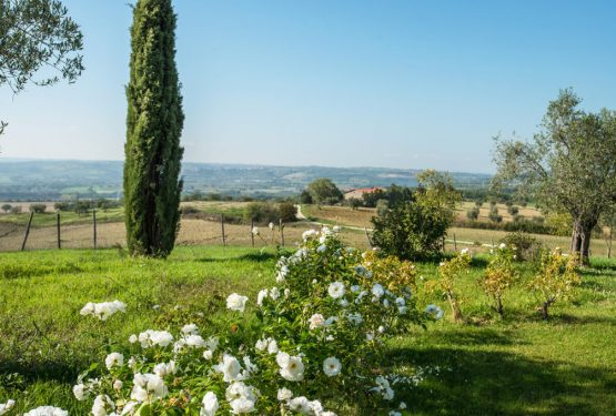 "A real wellness and nature oasis near Orvieto: ""Podere Del Poggio"""