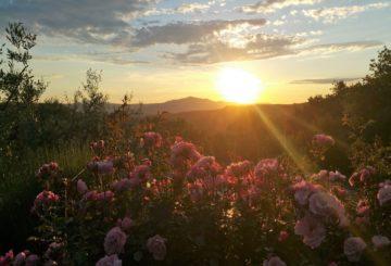 """Tra Umbria e Toscana l'incantevole location di podere """"Tramonto A Parrano"""""""