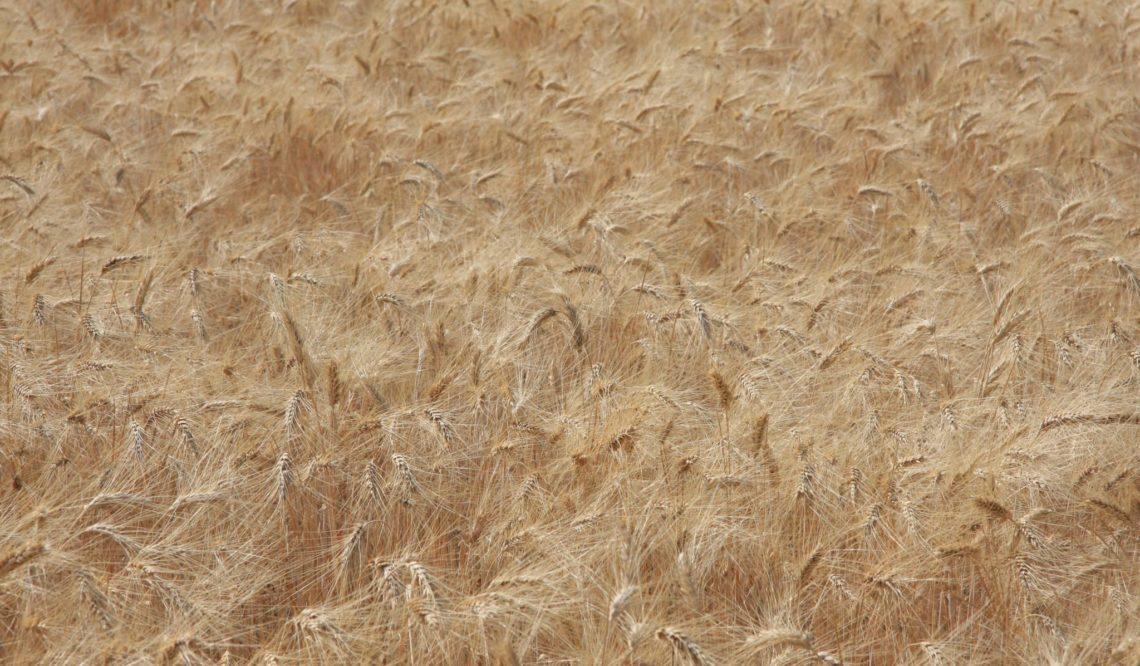 L'imprenditore agricolo professionale: qualifica e requisiti