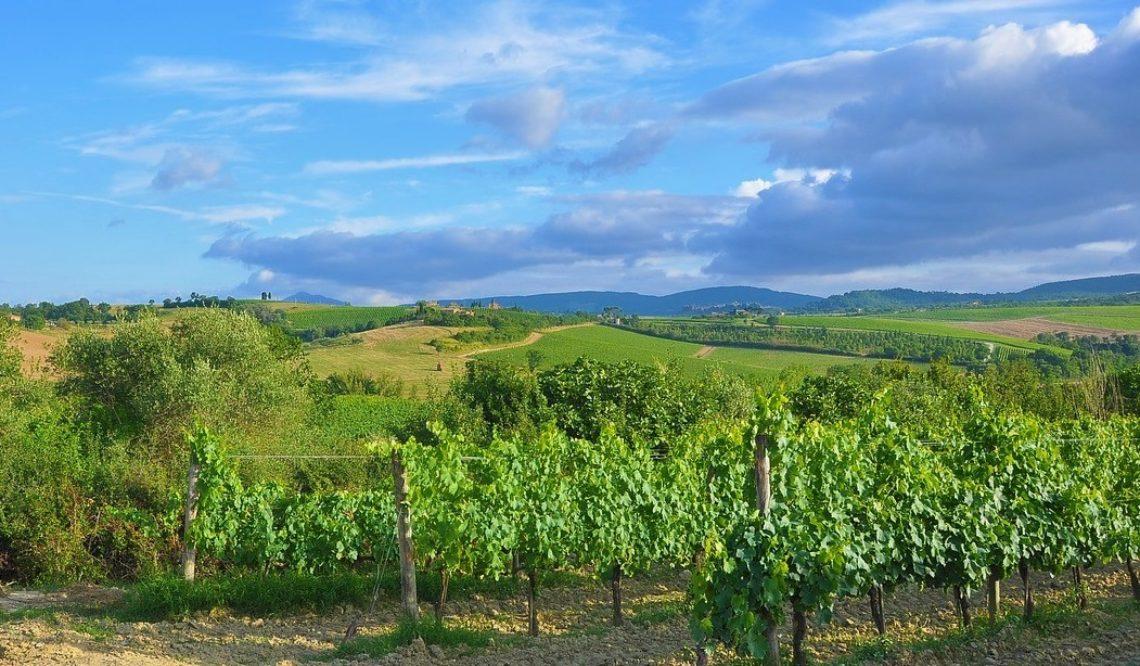 Ad aprile Great Estate vende un'importante azienda vitivinicola in Toscana