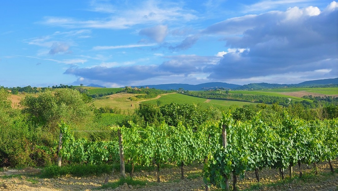 In April, Great Estate signs the sale of an important wine estate in Tuscany