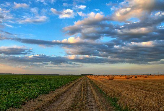Protetto: Gli attuali orientamenti sulla prelazione legale in agricoltura