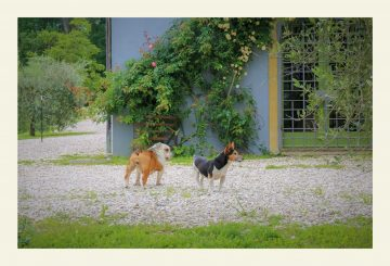 """Carlo and Beatrice: """"Podere Monteverde"""" grew up with us!"""