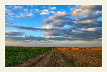 Преференциальное право на выкуп аграрных земель: принципы и приоритеты, действующие на данный момент