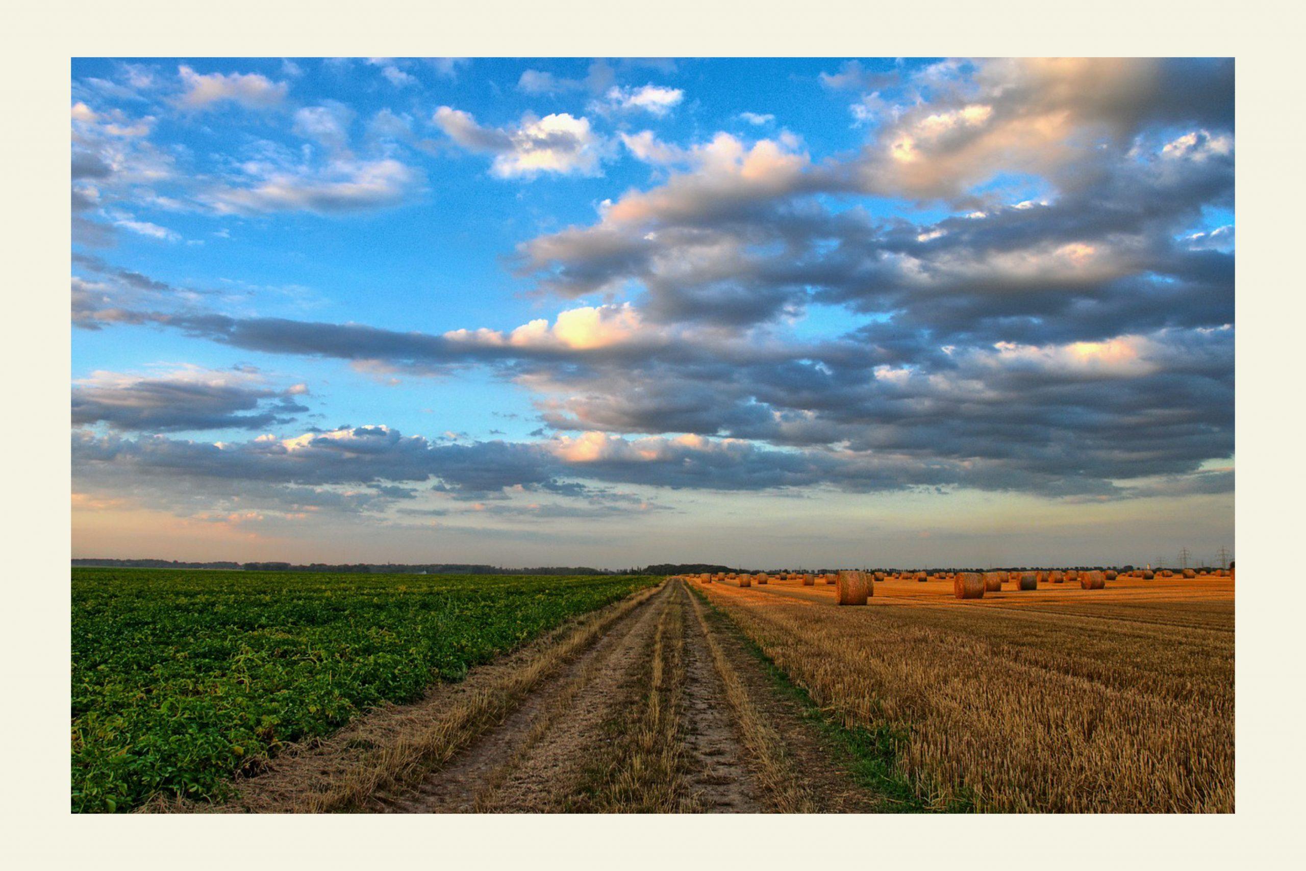 La prelazione agraria: quali sono gli attuali orientamenti?
